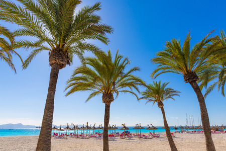 majorca: Platja de Alcudia beach Palm trees in Mallorca Majorca at Balearic islands of Spain