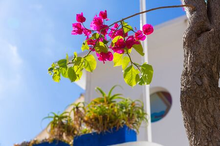 bougainvilleas: Majorca Cala Ratjada bougainvilleas Rajada in Capdepera Mallorca Stock Photo