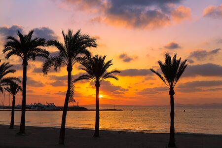 palmier: Majorque El Arenal Sarenal plage coucher de soleil pr�s de Palma de Majorque en Espagne �les Bal�ares