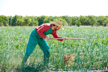 hoe: Farmer man working in onion orchard field with hoe tool Stock Photo