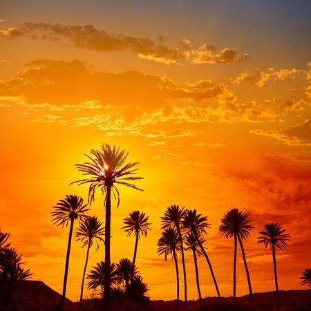 naranja arbol: Almería en Cabo palmeras en la playa de Rodalquilar en la España mediterránea Foto de archivo