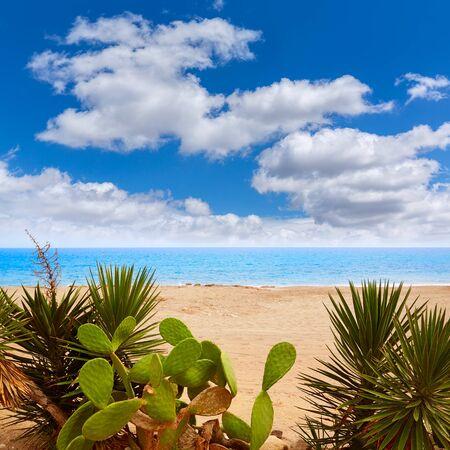 prickly pear: Almeria Mojacar beach in Mediterranean sea of Spain