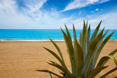 agave: Almería Mojácar Agave playa en el mar Mediterráneo de España