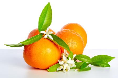 Arance con fiori fiori d'arancio in primavera su sfondo bianco