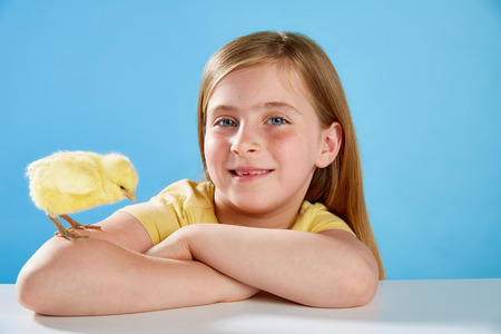 Kid girl with yellow chick playing on table with blue background photo