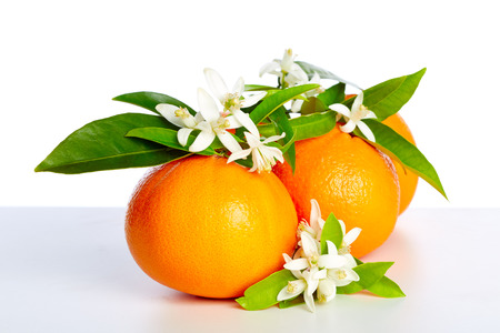 Oranges with orange blossom flowers in spring on white background Archivio Fotografico