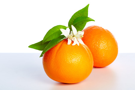 orange blossom: Oranges with orange blossom flowers in spring on white background Stock Photo