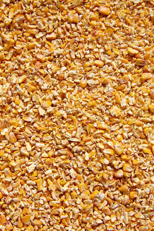 milled: Corn seeds low milled seeds pattern texture background