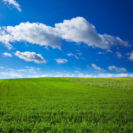 xacobeo: Cereal fields by The Way of Saint James in Castilla near Burgos Stock Photo