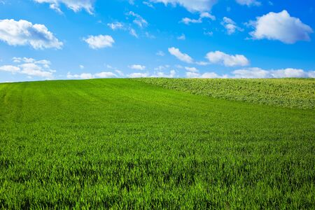 blue sky: Cereal fields by The Way of Saint James in Castilla near Burgos Stock Photo