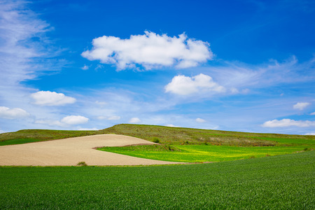 xacobeo: Cereal fields by The Way of Saint James in Castilla near Burgos Stock Photo