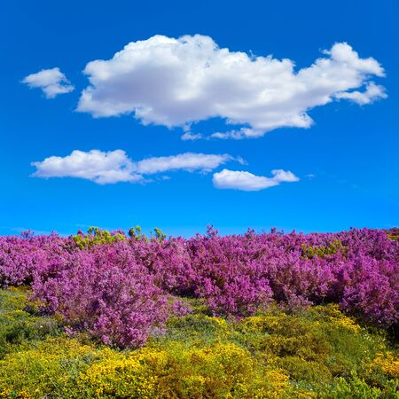 pilgrim journey: The way of Saint James in Leon Bierzo pink flowers mountains to cruz de Ferro Stock Photo