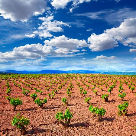 la rioja: La Rioja vineyard fields by The Way of Saint James in Logrono