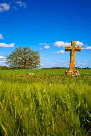 french countryside: The Way of Saint James cross in Palencia cereal fields of Spain