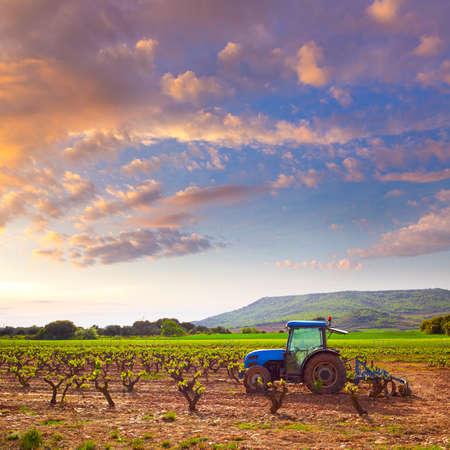 rioja: La Rioja vineyard sunset in The Way of Saint James