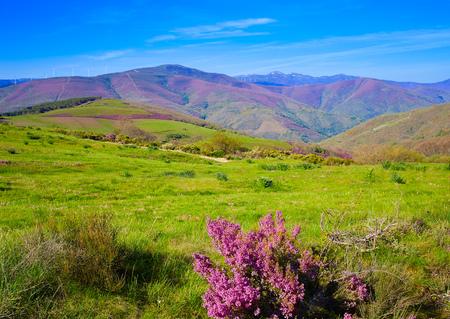 ferro: The way of Saint James in Leon Bierzo pink flowers mountains to cruz de Ferro Stock Photo