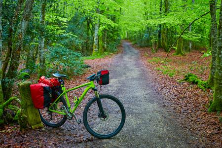sain: Roncesvalles beech begin of Way of Sain James biking in Navarra Pyrenees Stock Photo