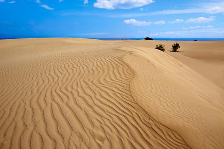 duna: Dunas de Corralejo Fuerteventura desierto en Islas Canarias de España Foto de archivo