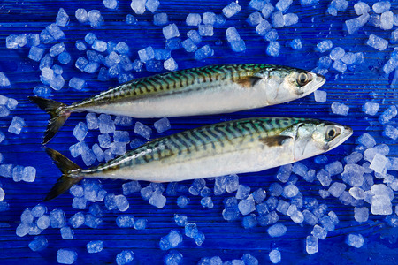 fresh fish: mackerel fresh fish on ice in a blue wooden background Stock Photo