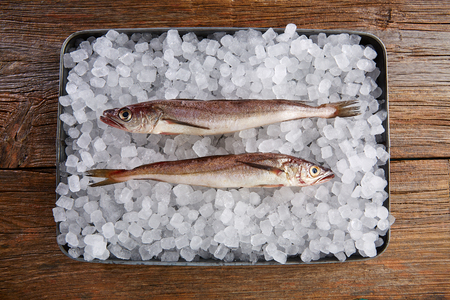 hake: Hake fish on ice tray side view and wooden table