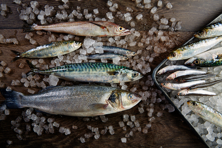 hake: Fresh fishes mix hake seabass sardine mackerel anchovies on ice and wood