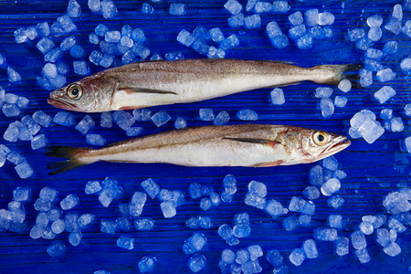 hake: Hake fish on ice side view and blue table Stock Photo