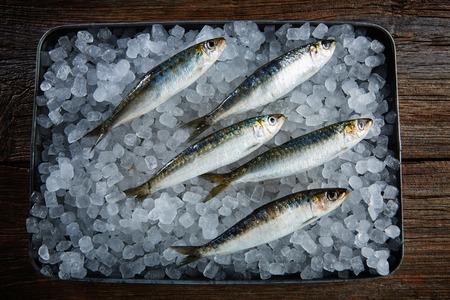 sardinas: Sardinas pescados frescos en la bandeja de hielo y mesa de madera Foto de archivo