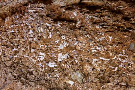 dweling: ossuary prehistoric in Cueva Calaveras of Benidoleig at Alicante Spain