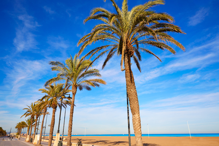 paradise bay: Valencia La Malvarrosa beach palm trees promenade in Spain