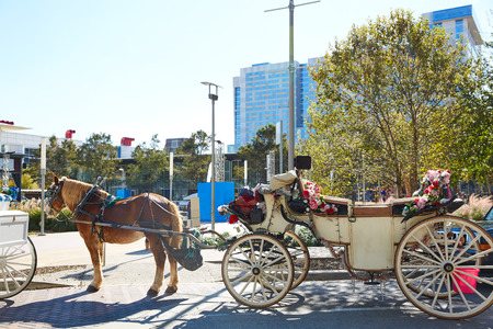 discovery: Houston Discovery green park horse carriages Texas