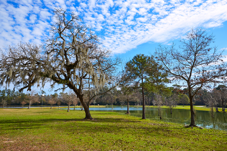 nature conservancy: Tomball Burroughs park in Houston Texas with mossy oaks Stock Photo