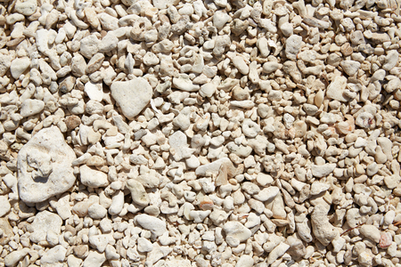taylor: Key West beach shells sand detail in Florida USA fort Zachary Taylor Stock Photo