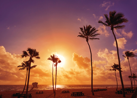fort lauderdale: Fort Lauderdale beach morning sunrise in Florida USA palm trees