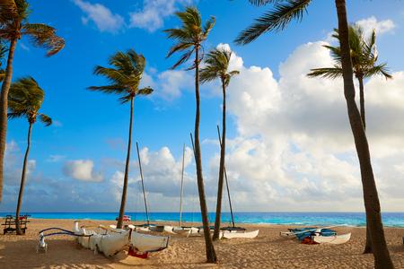 フォート ローダーデール ビーチ フロリダ米国のヤシの木の朝日の出