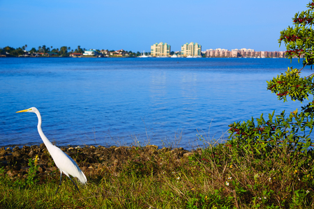 Naples Florida Marco Island view heron bird in Florida USA Stock Photo - 58892786