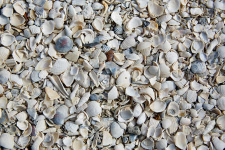 soil texture: Florida Fort Myers beach sea shells sand in USA