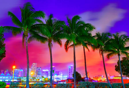 palm trees: Miami skyline at sunset with palm trees in Florida USA