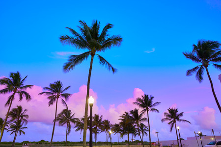 palm trees: Miami Beach South Beach sunset palm trees in Ocean Drive Florida Stock Photo