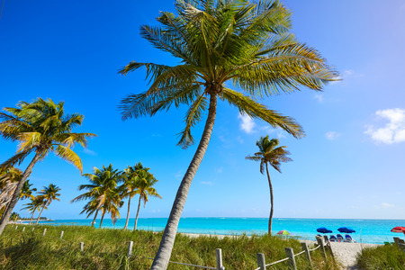key of paradise: Key west florida Smathers beach palm trees in USA