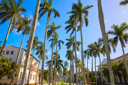 royal background: Palm Beach royal Palm Way in Florida USA palm trees in a row