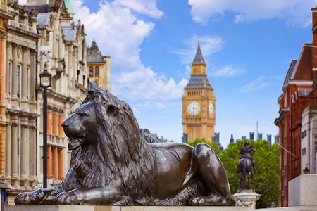 trafalgar: London Trafalgar Square Lion in UK england Stock Photo