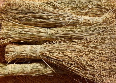 enea: Esparto halfah grass used for crafts as cords basketry and espadrilles