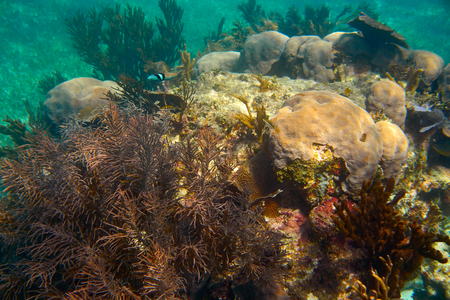 great barrier reef marine park: Mesoamerican barrier Great Mayan Reef in Riviera Maya of Caribbean Mexico