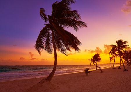yucatan: Tulum beach sunset palm tree in Riviera Maya at Mayan Mexico Stock Photo