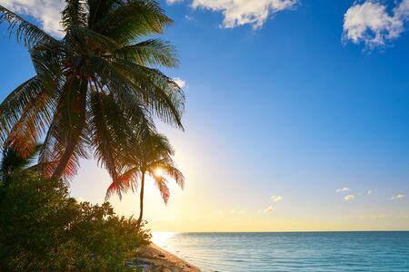 yucatan: Holbox island sunset beach palm tree tropical in Mexico