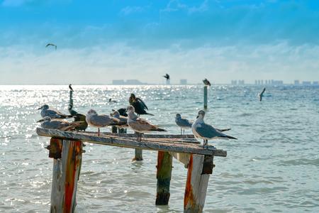 Isla Mujeres island Caribbean beach birds of Riviera Maya in Mexico Stock Photo
