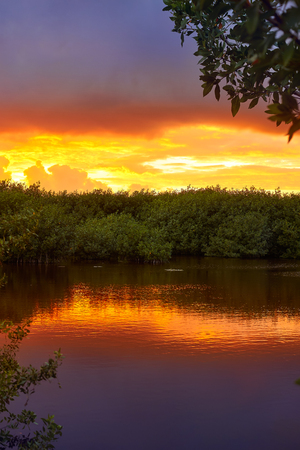 Mangroove sunset in Riviera Maya of Mayan Mexico