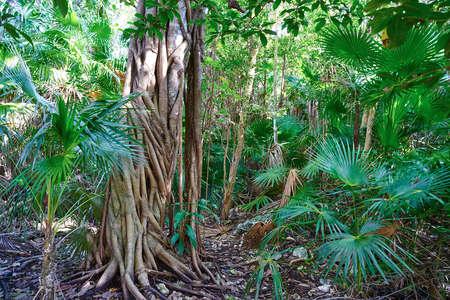 Rainforest jungle in Riviera Maya at Mayan Mexico 스톡 콘텐츠