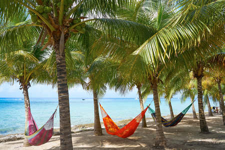 Cozumel island beach palm tree hammocks in Riviera Maya of Mexico 版權商用圖片 - 91833183