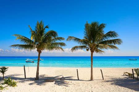 Puerto Morelos beach palm tree in Mayan Riviera Maya of Mexico